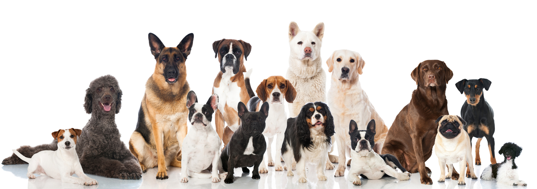 hesca health and science of pets